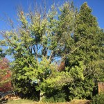Are your trees ready for El Niño?