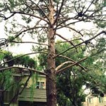 Drought Proofing Your Tree